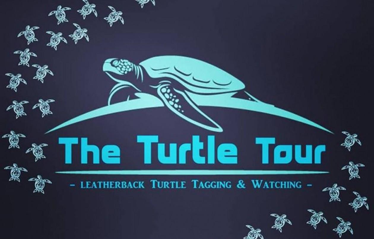 Turtle Tour 2
